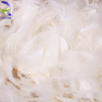 Duck down for wholesale filling material white feather