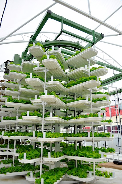 best indoor simple hydroponic grow system