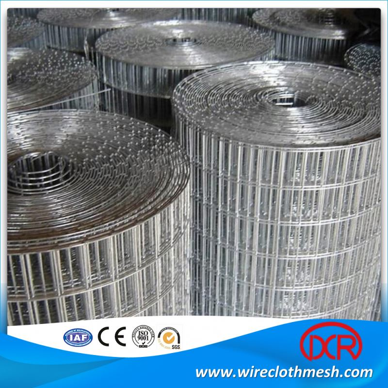 Cheap Stainless Steel Galvanized Welded Wire Mesh