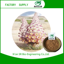 Hot selling Cistanche Tubulosa Extract / Cistanche Bark P.E. with high quality