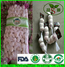 [HOT]2017 fresh white garlic quality agriculture wholesale china/Garlic