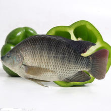 Frozen live tilapia fish wholesale from China
