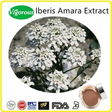 High Quality Iberis Amara Extract/Kosher Iberis Amara Extract Powder/FDA Iberis Amara Powder