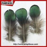 6-10cm green color wholesale prices down pheasant feathers sale