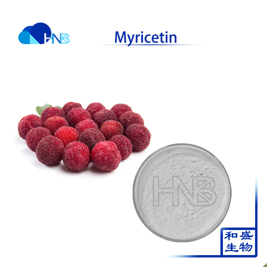Pure Natural red bayberry extract Myricetin 98% powder waxberry extract Myrica rubra extract cas 529-44-2