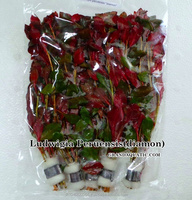 Ludwigia Peruensis Diamon Live Aquatic Plants Wholesale / Thailand Aquatic Plants Exporter