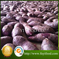 2015 fresh sweet No seed sweet potato