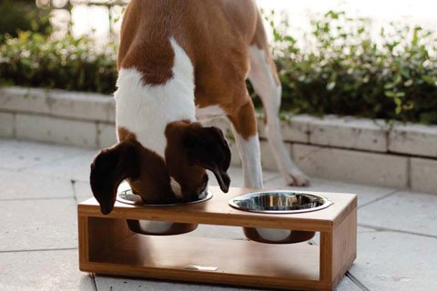 eco friendly High quality new design classic bamboo pet bowl wooden bowl round stainless steel bowl
