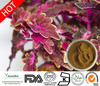 High quality 100% Pure Natural Forskolin Coleus Forskohlii extract for Weight loss