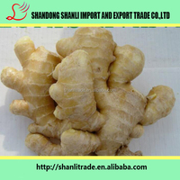 Young Ginger Variety and Ginger Type price of fresh ginger 2016