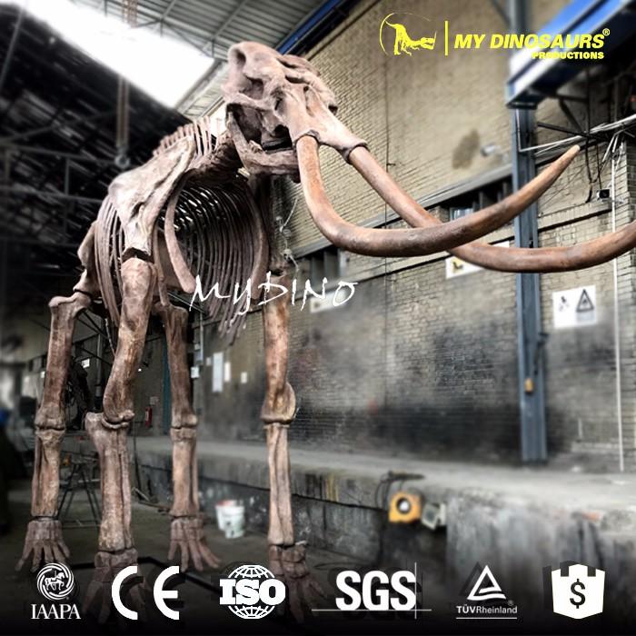 Elephant Skeleton.jpg