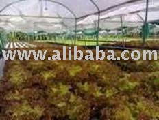Hydroponics equipments and products