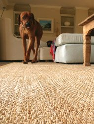 Sisal Rugs carpet