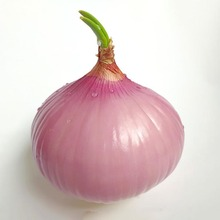 Hot Sale New Harvest Onion Egypt