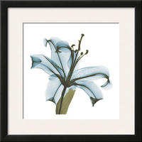 Modern Fine Canvas Print Art Painting beautiful flower designs blue lily painting