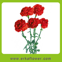 Order Red Spray black roses sale fresh flowers With Gift Box