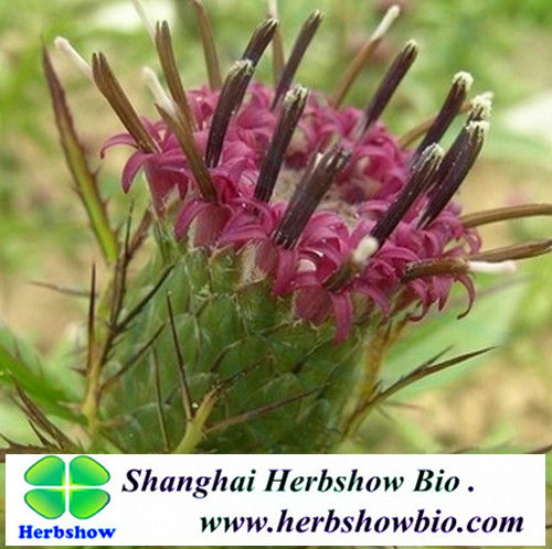 TCM seeds:Top quality atractylodes seeds for sale