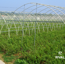 UV Treated 5 Layer PE Plastic Poly Film For Agriculture Greenhouse Covering