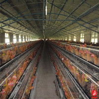 poultry chicken farm shed design chicken layer battery cage/automatic poultry cages