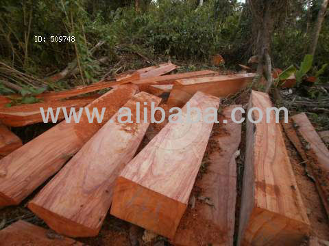 Hard wood, Tropical Teak , IPE , Oak , Mahugany, caribean Pine Logs
