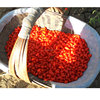 Hot Sale Wolfberry Medlar Dried Organic Goji Berry Import Goji berries