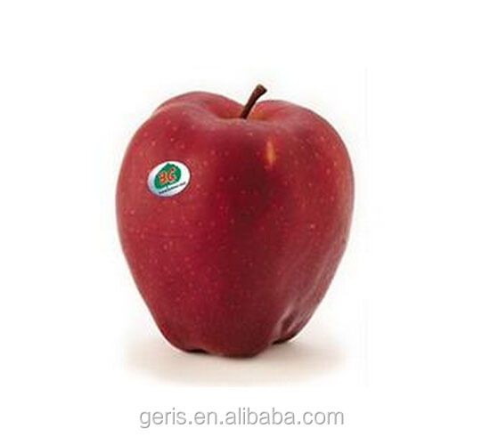 Fresh China red delicious apple