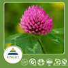 Hot Selling Red Clover Extract Isoflavones Healthcare Product