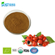 High Quality Pure Natural Guarana Seed Extract