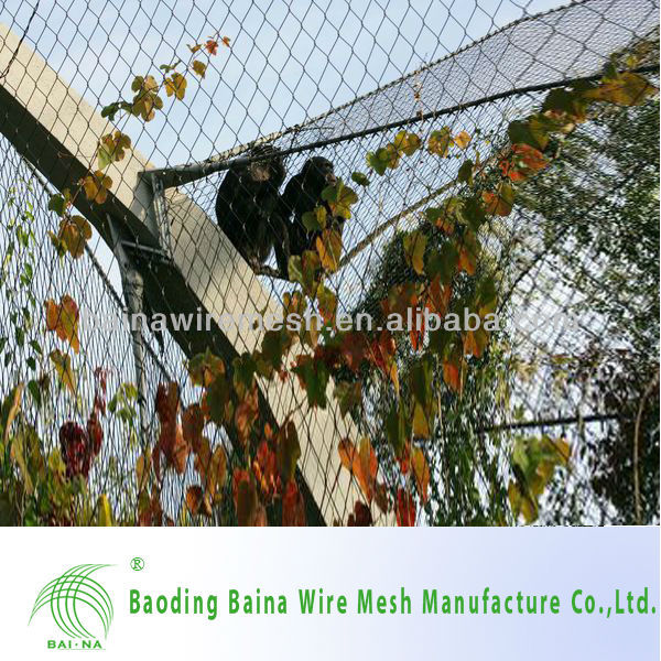 Popular Stainless Steel Bird Netting Experienced Supplier