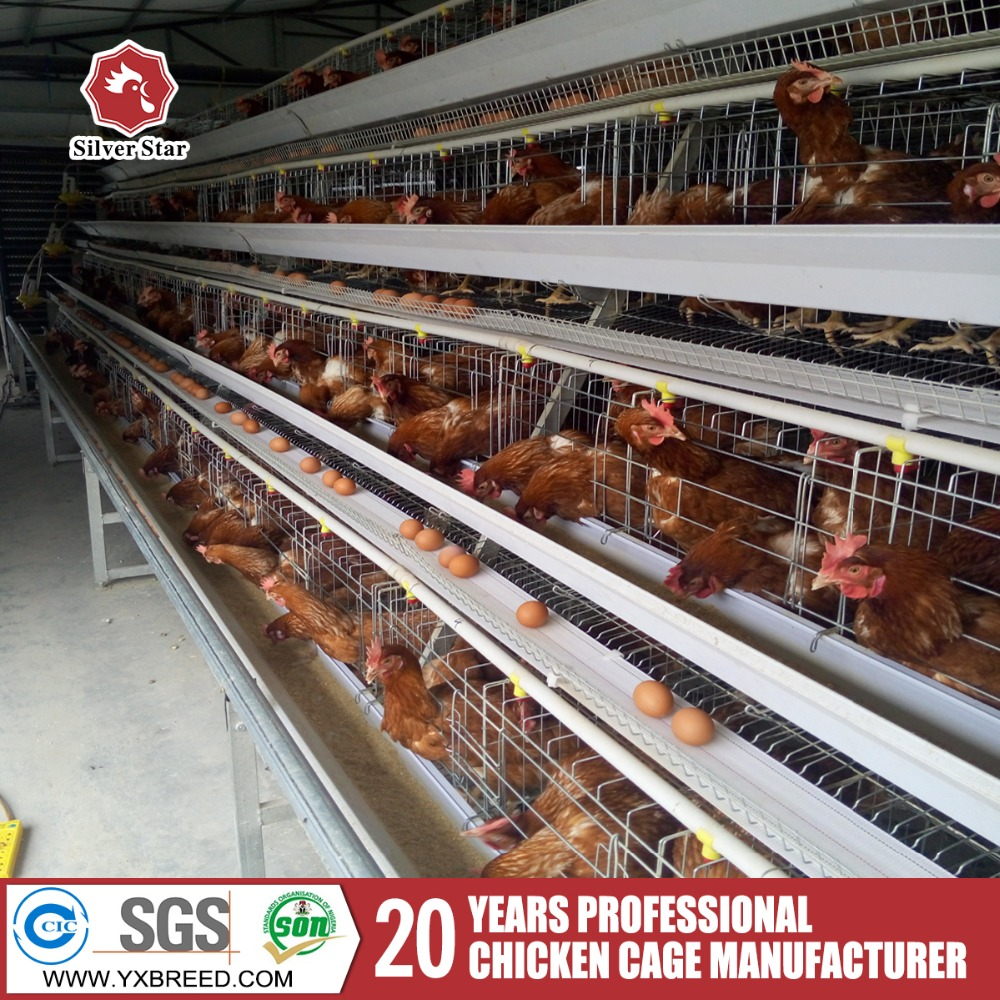 Layer chicken Poultry Farm Shed With Low Cost Equipment