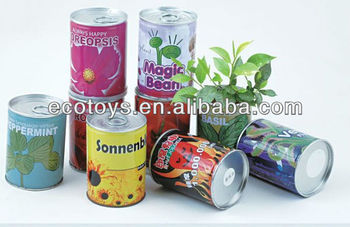 Popular tin plant,Cans plants,Decorative plants