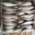 High Quality Seafrozen Seafood Sardine Canned Fish
