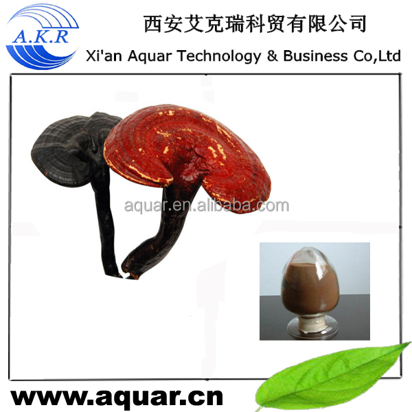 Newly product japan raw Reishi mushroom powder and pharmaceutical grade