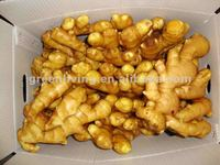 fresh ginger buyers(HACCP,ISO9001)