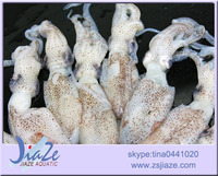 zhoushan sea caught frozen baby squid