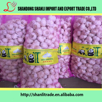 fresh garlic,garlic price in china 2016,garlic price
