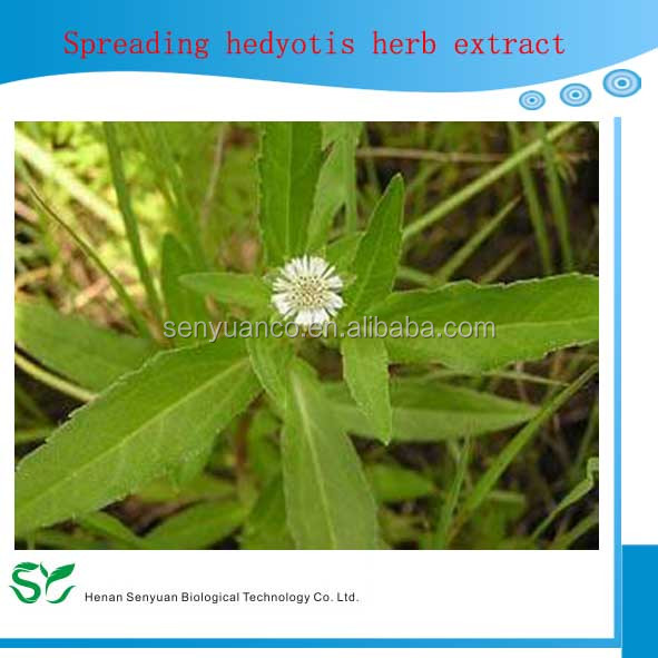 100% Natural Spreading Hedyotis Herb Extract