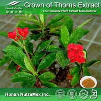 Free sample Euphorbia milii extract/Christ thorn extract/Holy thorn extract Plant extract