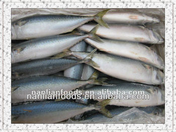 new season fishing supplies from china for pacific mackerel
