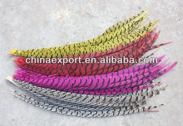 colorful Lady Bottom Amherst Pheasant Feather tails