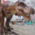 KANO0155 Attractive Outdoor Life Size Animatronic T-Rex For Sale