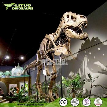 High Quality Museum Exhibition Dinosaur Fossils