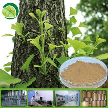 GMP natural extract of ginkgo biloba leaf