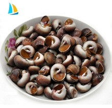Fresh frozen new moon snail live snails