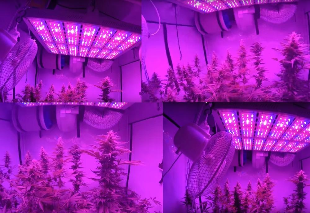 14X- led grow light-