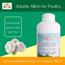 50% Allicin common livestock and poultry feed for growth efficacy feed additive