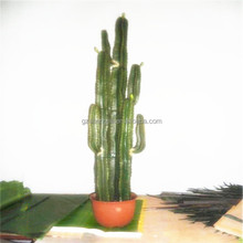 SJM091046 al por mayor <span class=keywords><strong>de</strong></span> calidad superior 100% natural Hoodia decoración cactus artificial p.e./Prickly Pear <span class=keywords><strong>planta</strong></span>