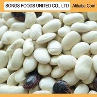 High Quality White Kidney Beans price
