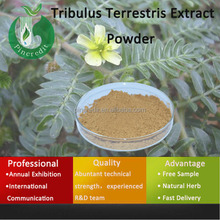 Tribulus Terrestris Extract Powder 60 Saponins/Super Tribulus Terrestris Extract Powder/Tribulus Terrestris Extract Powder