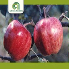 china fruit and vegetable price list red star apple for sale